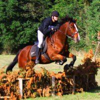 Horse-Jump-2